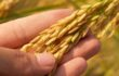 The Moral and Scientific Opposition to GMO's